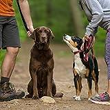 Kurgo Wander(TM) Dog Collar