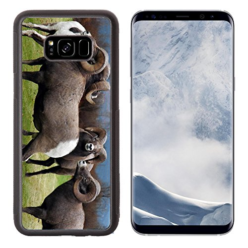 Liili Premium Samsung Galaxy S8 Plus Aluminum Backplate Bumper Snap Case Image Id  2038455 This Group Of Four Rocky Mountain Bighorn Sheep Has Formed Their Own Square Dance