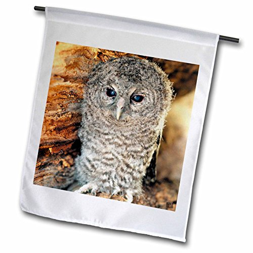 - 3dRose fl_9903_1 Tawny Owl, Strix Aluco One Month Young Owl Aragon Spain Garden Flag, 12 by 18-Inch