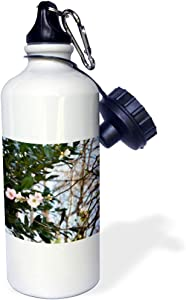 3dRose WhiteOaks Photography and Art - Apple Blossoms - an Apple Blossom Tree - 21 oz Sports Water Bottle (wb_181126_1)