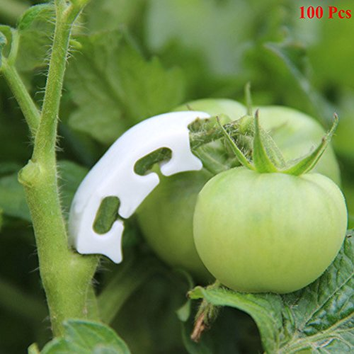Exttlliy 100pcs Plant Support Garden Fixing Clips White for Tomato Stem to Grow Upright Healthier by Exttlliy