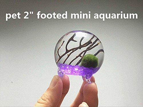 "NewdReamWorld Marimo Tank Kit with 2"" Footed Pet Orb Terrarium/Aquatic Moss Ball/Glass Gravels/Sea Fan"