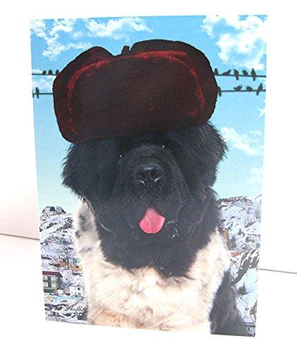 Funny Newfoundland Dog Wearing Winter Hat Blank Greeting Card