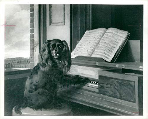Vintage photo of Spaniel Dogs: cocker on the keys.