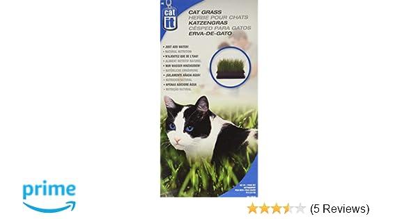 Amazon.com : Catit Cat Grass, 2.6-Ounce : Pet Snack Treats : Pet Supplies