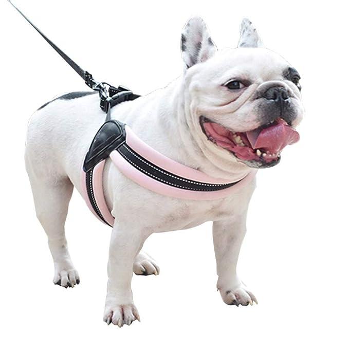 CAOQAO - Chaleco Reflectante para Perro con arnés Ajustable y ...