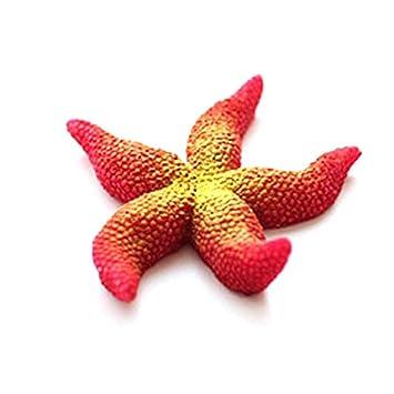 Gankmachine 1pcs Resina Verde Coral Estrella de mar Decorativo paisajismo Acuario pecera Decorativa K: Amazon.es: Hogar