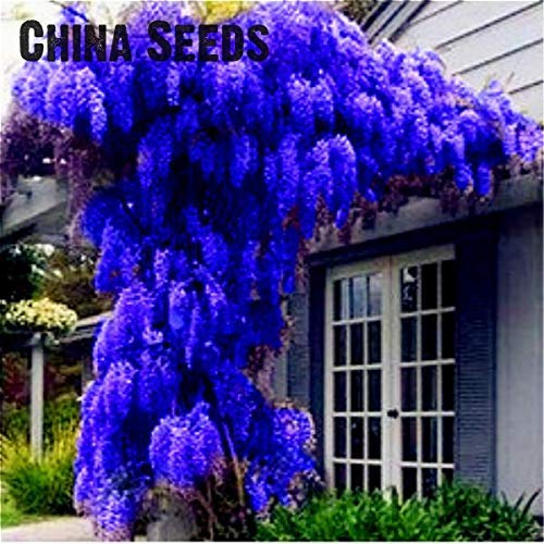 GDGY 2019 Wisteria Bonsai 10pcs/Pack Rare Bonsai Wisteria Tree Bonsai Garden Ornamental Plant Flower Bonsai Purple