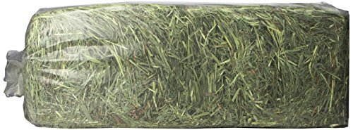 - Timothy Gold Hay, 5Lb, Blue