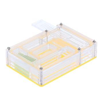 FLAMEER Caja Rectángulo Vivienda Acrílico Nido Hormigas Alimentación Formicarium: Amazon.es: Deportes y aire libre