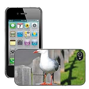 Just Phone Cover Etui Housse Coque de Protection Cover Rigide pour // M00139242 Gaviota de aves acuáticas aviar // Apple iPhone 4 4S 4G