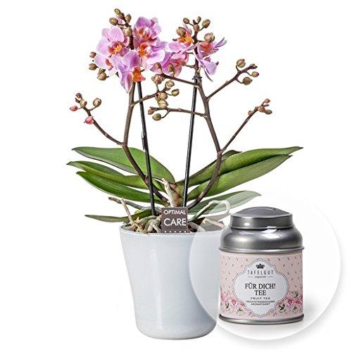 Rosa Orchidee im weißen Glastopf und Für Dich Tee