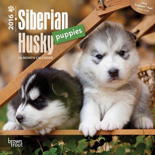 Siberian Husky Puppies 2016 Mini 7x7 (Multilingual Edition)