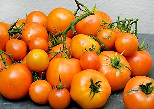 Orange Tomatoes - 30+ ORGANICALLY GROWN Tangerine Orange Beefsteak Tomato Seeds, Heirloom NON-GMO, Indeterminate, Open-Pollinated, Low Acid, Productive, Delicious, From USA