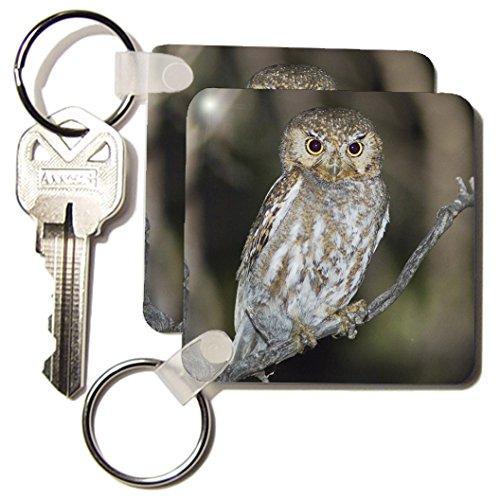 3dRose Elf Owl, Madera Canyon, Arizona - NA02 RNU0565 - Rolf Nussbaumer - Key Chains, 2.25 x 4.5 inches, set of 4 (Rolfs Key)