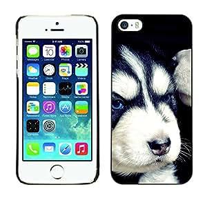 YiPhone /// Prima de resorte delgada de la cubierta del caso de Shell Armor - Evil Siberian Husky Angry Puppy - Apple iPhone 5 / 5S