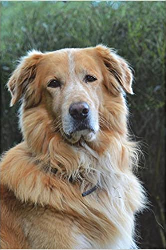 Golden Retriever Dog Portrait Journal 150 Page Lined Notebook Diary Image Cool 9781537157740 Amazon Com Books