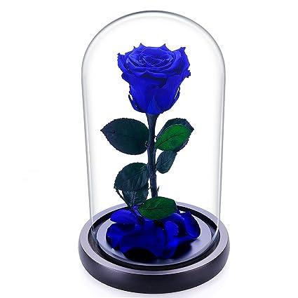 Zhuotop Rosa Perenne In Teca Di Vetro Idea Regalo Unica Rose