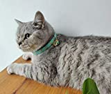 Cat Breakaway Collars with Bell and Moon