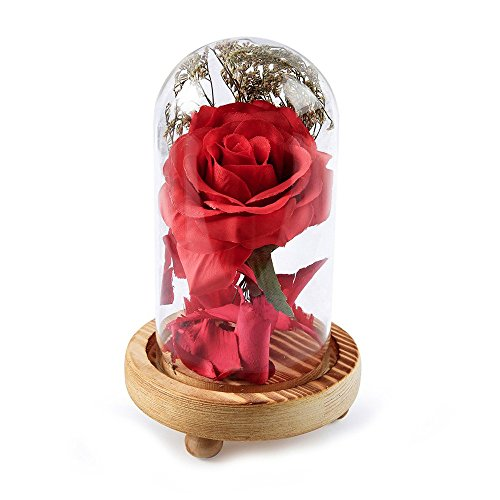 - PENGYGY Fashion Birthday Gift Red Rose Fallen Petals in A Glass Dome On A Wooden Base