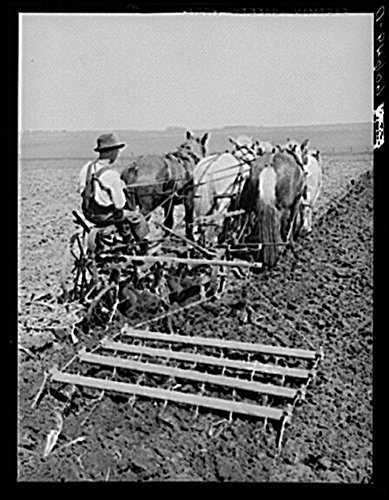 Operating plow and harrowing with team of horses. Grundy County, Iowa. Use of harness for plowing is rare in Grundy County, Iowa