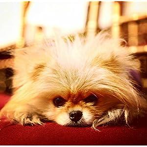 Vanderpump Pets Bone Pendant Dog Collar, Small, Blue
