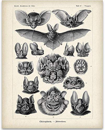 Ernst Haeckel Bats Illustration - 11x14 Unframed Art Print - Great Biology Lab Decor or Gift Under $15 for People Who are Fascinated with - Print Decorations Halloween