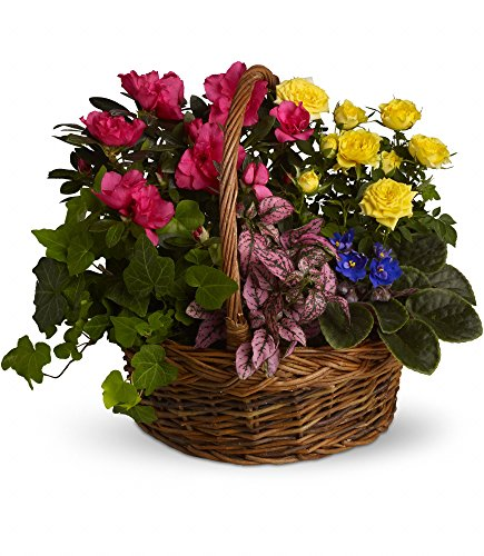 Chicago Flower Co. - Blooming Garden Basket - Fresh and Hand Delivered