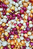 MIX, Red,Yellow,White,Onion Sets , (40 Bulbs) Garden Vegetable