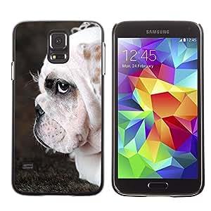 Be Good Phone Accessory // Dura Cáscara cubierta Protectora Caso Carcasa Funda de Protección para Samsung Galaxy S5 SM-G900 // English Bulldog British Wrinkled Dog