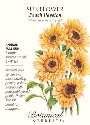 Flower Seeds - 500 mg Seeds of Peach Passion Sunflower Seeds - Helianthus -