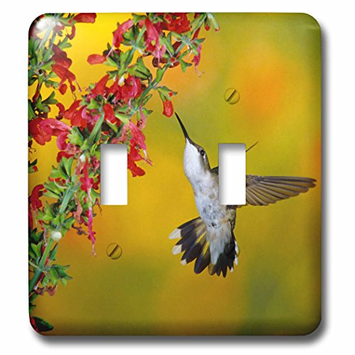 3dRose Danita Delimont - Hummingbird - Ruby-throated Hummingbird female on Lady-in-Red Salvia - Light Switch Covers - double toggle switch ()
