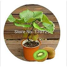 Kiwi fruit seeds,Potted plants,MIN tree Nutrition is rich, beautiful,Bonsai,Vegetable melon seed - 10 pcs / lot
