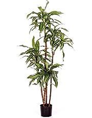 Verdevip Dracena Fragrans variegata–árbol Artificial (arredo Interno con Troncos auténticos–Alto 150cm
