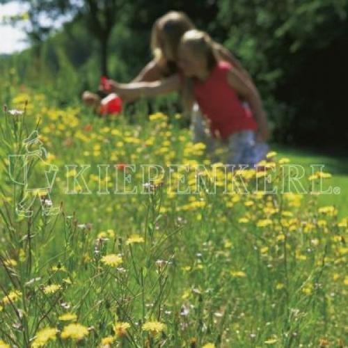 Kiepenkerl RSM 7.2.2 Landschaftsrasen Trockenlagen mit Kräutern 10 kg, Rasensamen, Rasensaat