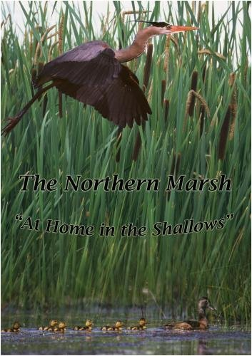 The Northern Marsh, At Home in the Shallows Wildlife Birds Mammals Video DVD