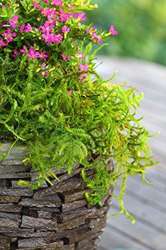 The 8 best moss