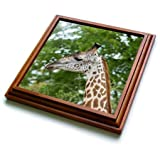 3dRose trv_256997_1 Africa, Zambia, South Luangwa National Park Thornicrofts Giraffe Trivet with Tile, 8 by 8''
