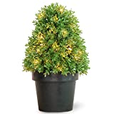 National Tree 18 Inch Boxwood Tree with 35 Clear Lights in Dark Green Growers Pot (LBX4-300-15-1)