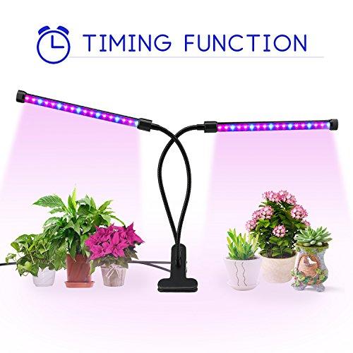 Vegetable Garden Light Requirements - 9