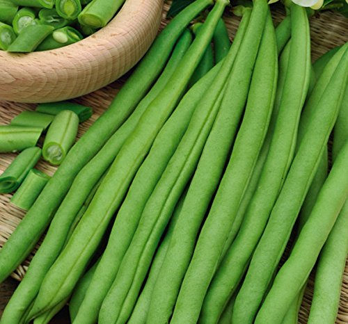 (Bean Esterka - tasty, stringless, green pods - seeds)
