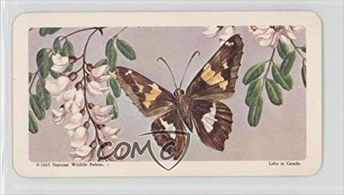 Silver-Spotted Skipper (Trading Card) 1965 Brooke Bond Red Rose Butterflies of North America - Tea [Base] - Canadian Black Backs #46