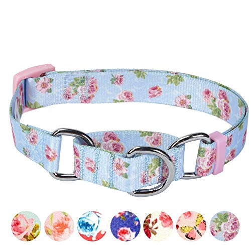 Blueberry Pet 6 Patterns Spring Scent Inspired Rose Print Safety Training Martingale Dog Collar, Pastel Blue, Medium, Heavy Duty Adjustable Collars for Dogs by Blueberry Pet