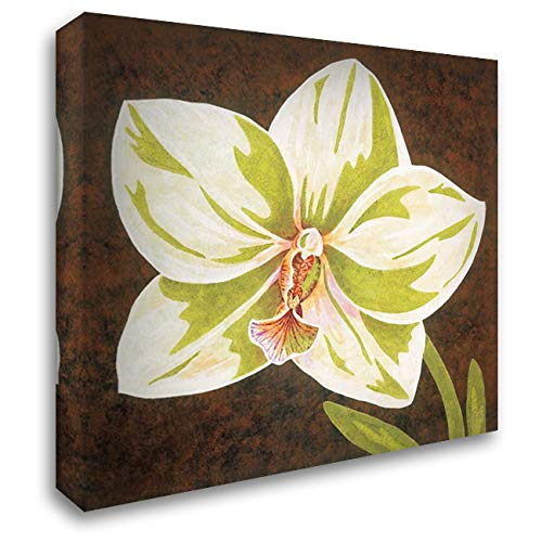Surabaya Orchid Petites B 28x28 Gallery Wrapped Stretched Canvas Art by Shelby, Judy