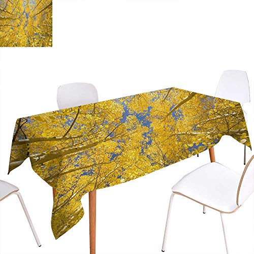 Warm Family Yellow and Blue Customized Tablecloth Looking Skyward Amongst The Patch of Sun-lit Aspen Trees in Autumn Life Print Stain Resistant Wrinkle Tablecloth 60