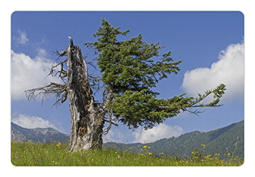 (Lunarable Nature Pet Mat for Food and Water, Old Spruce Tree Coming Back to Life from Death in Summer Meadow Country Image, Rectangle Non-Slip Rubber Mat for Dogs and Cats, Blue Olive Green)
