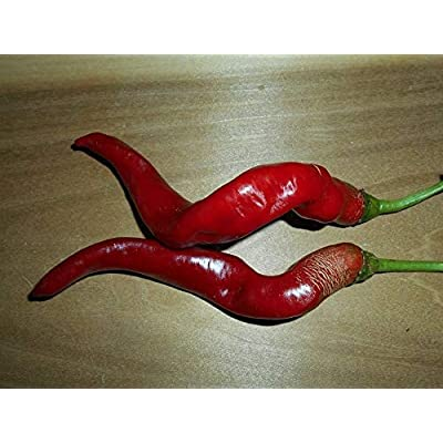 50+ Seeds Special Organic HJ-7 Super Nova Chinese Space Chili Pepper : Garden & Outdoor