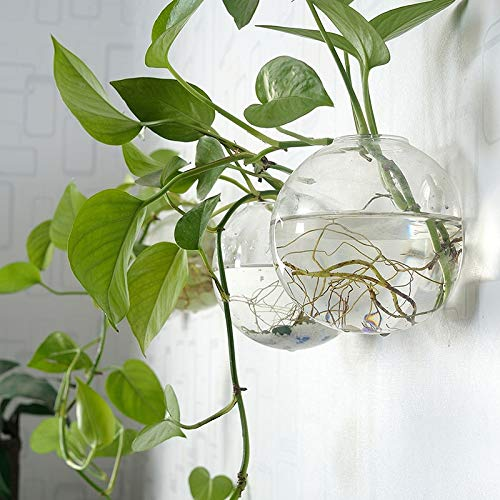 SeedWorld Flower Pots & Planters - Glass Flower pots Transparent Living Room Simple Modern Wall Hanging Rich Green Bamboo Shoots Green Water Decorated vase 1 PCs ()
