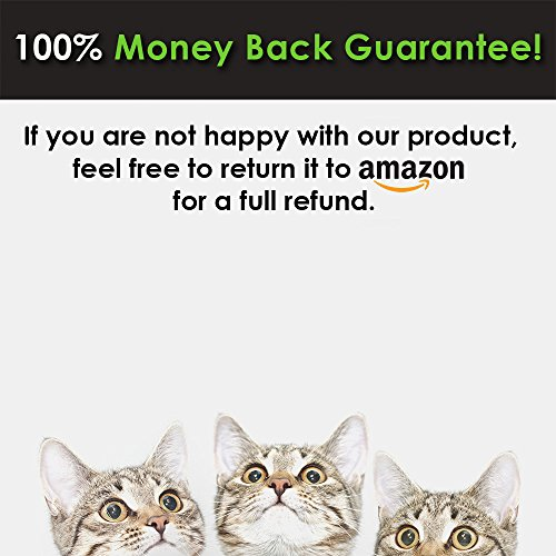 CatGuru NEW Premium Whisker Stress Free Cat Bowls, SET OF 2, Reliefs Whisker Fatigue, Wide Cat Dish, Non Slip Cat Feeding Bowls, Shallow Cat Bowls, Non Skid Pet Bowls For Cats, Oval, Marshmallow by CatGuru (Image #7)