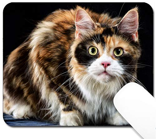 MSD Mouse Pad with Design - Non-Slip Gaming Mouse Pad - Image 30493398 Studio Photography cat The Breed The Maine Coon on a Black - Maine Cucumber